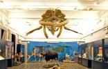 museo-civico-zoologia-roma-balena