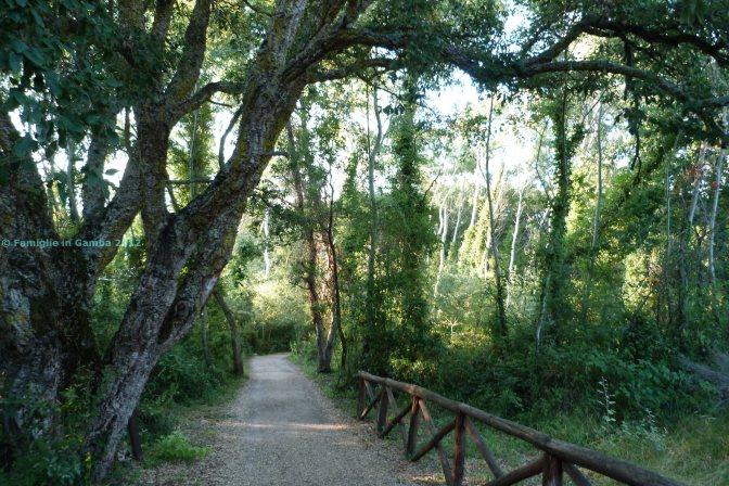 Natura, archeologia, bellezza: il Monte di Scauri