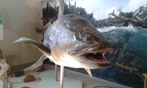 Mawsonia lavocati-preda Spinosauro)