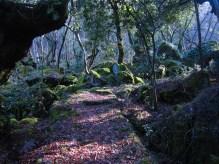 8 boschi incantati in cui perdersi. Bosco del Sasseto, Acquapendente (VT)