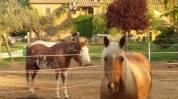 Agriturismo Casa di Campagna cavalli