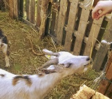 agriturismo-casa-di-campagna-fattoria