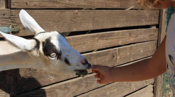 Cascina Bosco Gerolo, nella vera fattoria