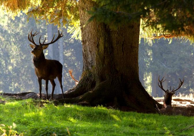 L'incanto magico della Natura. In val di Fiemme, in Trentino, l'estate è indimenticabile