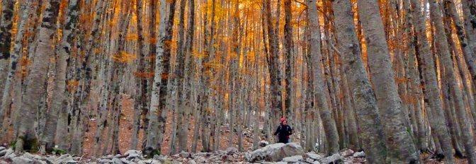 Le Alpi in Appennino: il Parco d'Abruzzo, Lazio e Molise e tutte le info per visitarlo con i bambini