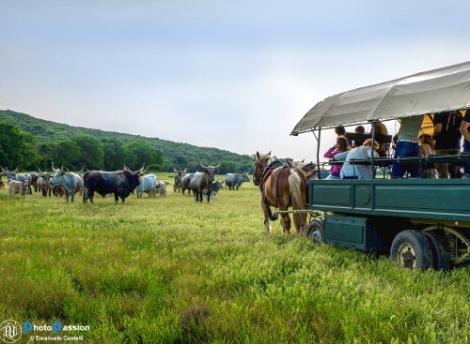 Parco della Maremma in carrozza