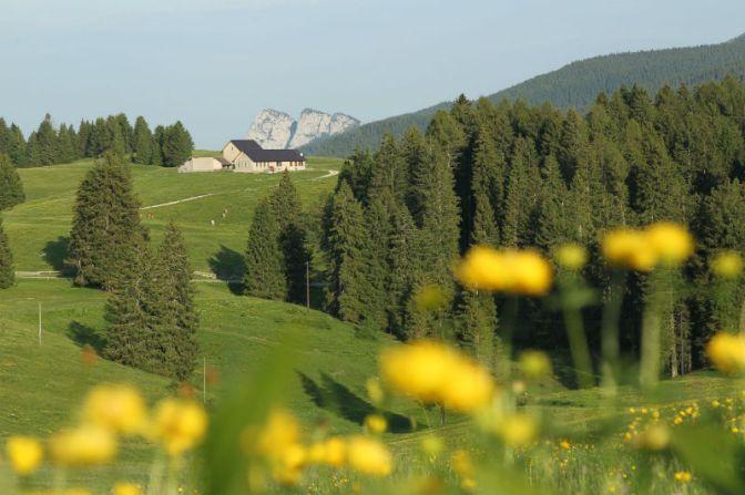 Sui sentieri delle emozioni: primavera ed estate nella meravigliosa Alpe Cimbra