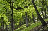 trentino_cimbra_percorso_respiro_alberi