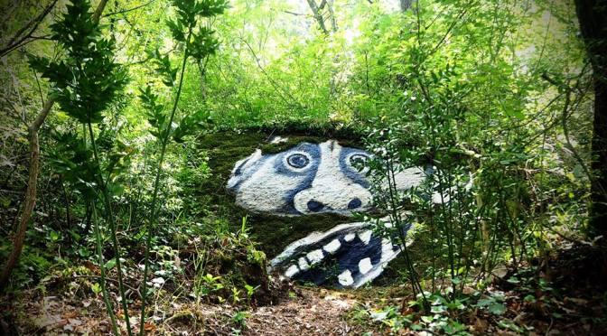 C'è una strada nel bosco…che porta dritta alla meraviglia