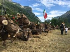 mirtillo_rosso_visita_fattoria