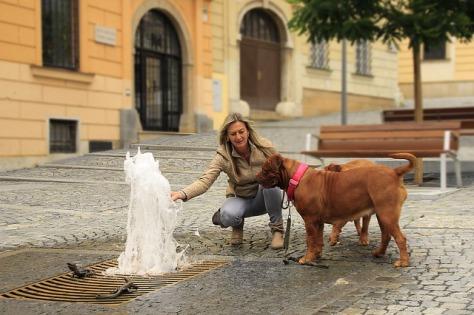 col-cane-nelle-citta-darte