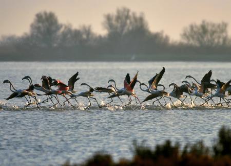 Delta del Po- uccelli