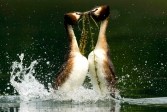 Delta_del_po_animali_acqua