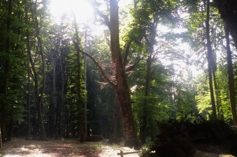 Foresta Umbria sul gargano