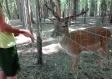 gargano-foresta-umbra