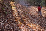 lombardia_sentiero_spirito_bosco_canzo_foglie