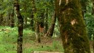 toscana_parco_foreste_casentinesi_daini