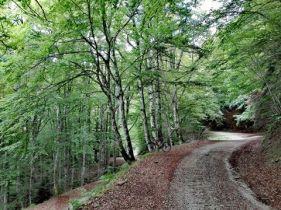 toscana_parco_foreste_casentinesi_sentiero