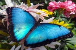 Butterfly Arc2