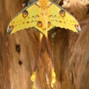 Butterfly Home Collodi2
