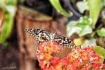 casa-farfalle-monteserra