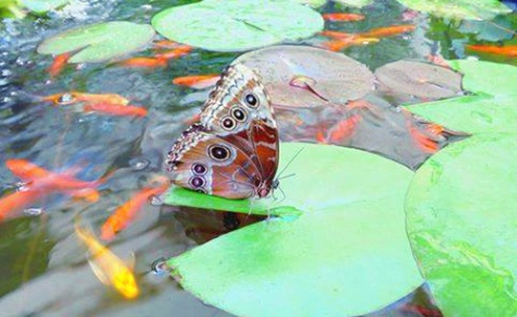 casa farfalle siracusa