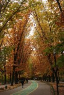 Halloween_transilvania_parco_Herastrau