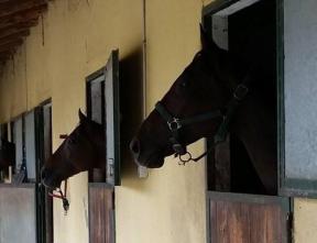 vecchie_fattorie_piemonte_cascina_del_castello_cavalli