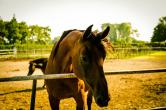 vecchie_fattorie_veneto_corte_pellegrini_cavalli