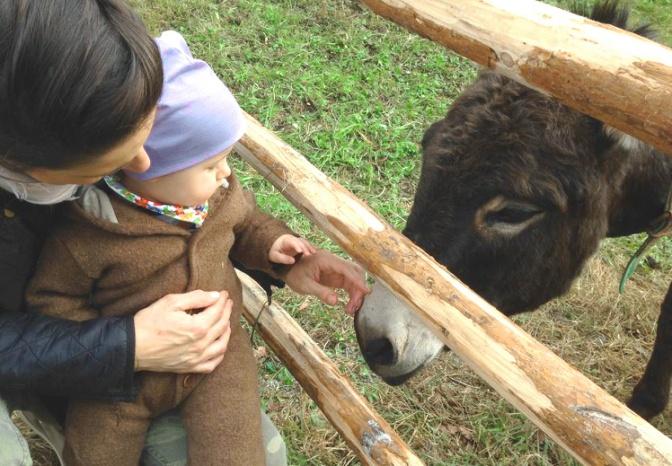 Nelle vecchie fattorie: 32 agriturismi dove si fa vita di campagna