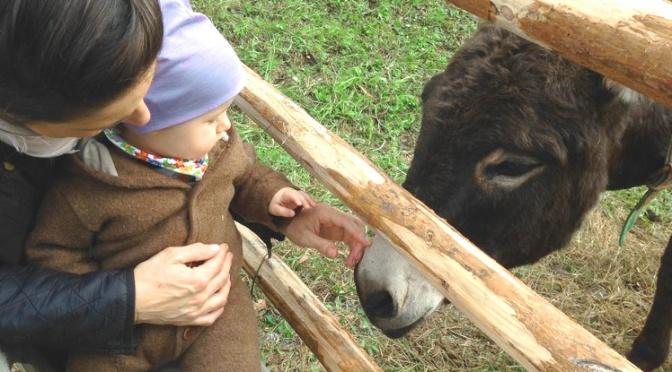 Nella vecchia fattoria: 35 agriturismi per famiglie e bambini dove si fa vita di campagna