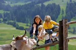vecchie_fattorie_trentino_Bühlerhof_animali