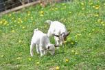 vecchie_fattorie_trentino_saderhof_animali