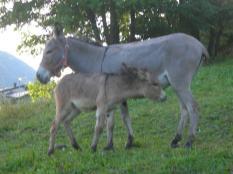vecchie_fattorie_valle_aosta_lo_ratele_animali