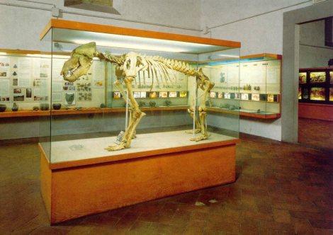 Firenze con i bambini Museo della preistoria