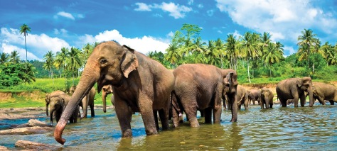 Sri-Lanka-Yala-National-Park_elephants