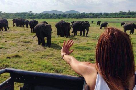 sri_lanka_minneriya-safari