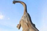 Pietre del Drago-Apatosauro