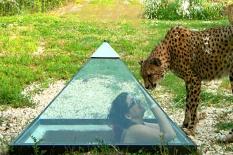 Zoo Falconara-piramide dei ghepardi